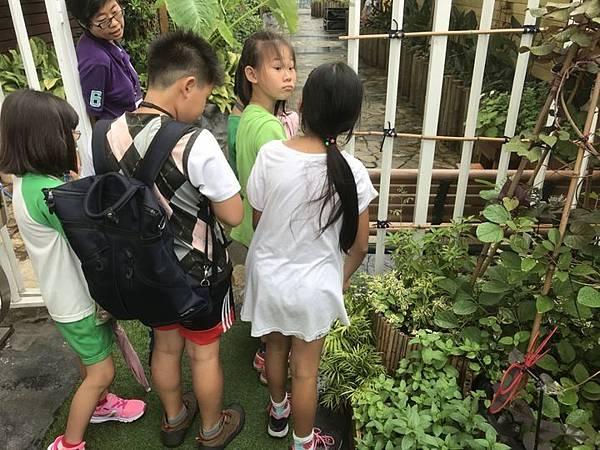 20180615花博公園亂亂逛 016.jpg