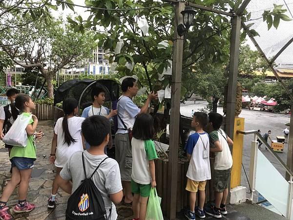 20180615花博公園亂亂逛 025.jpg