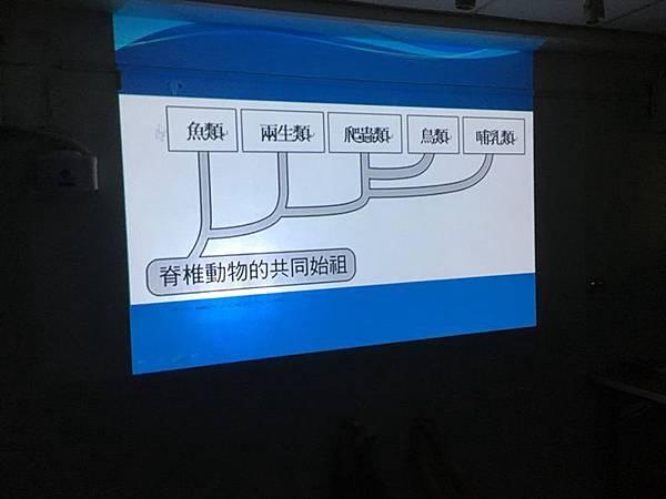 20180907 分組報告與詳細認識烏龜分類 027.jpg
