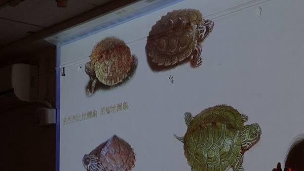 20181005 台灣本土龜鱉介紹與龜類健康狀況處置 042.JPG