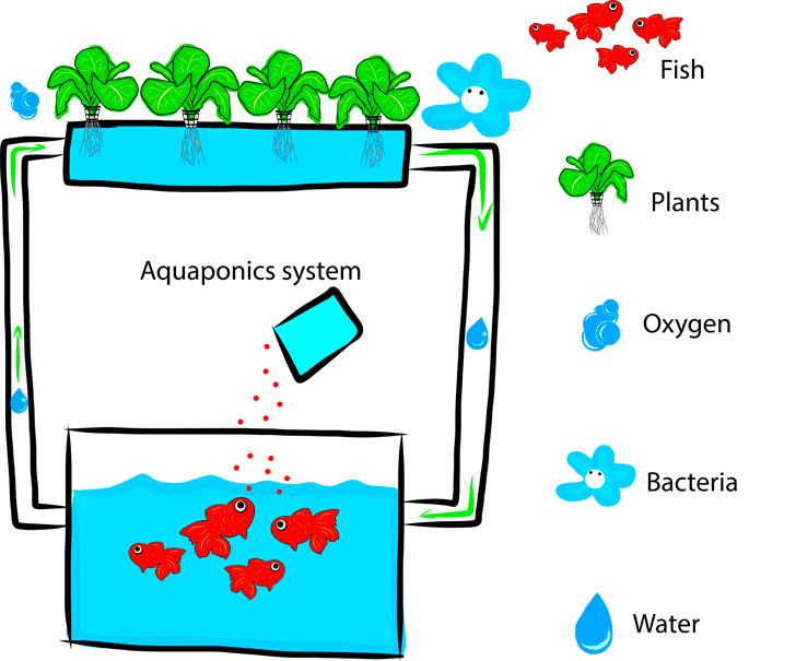 aquaponics-diagram.jpg