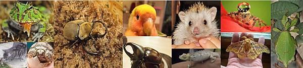 昆蟲動物六日課程介紹圖