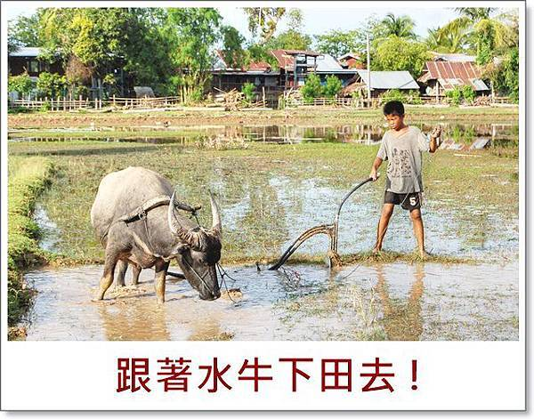 Child_and_ox_ploughing,_Laos_(1).jpg