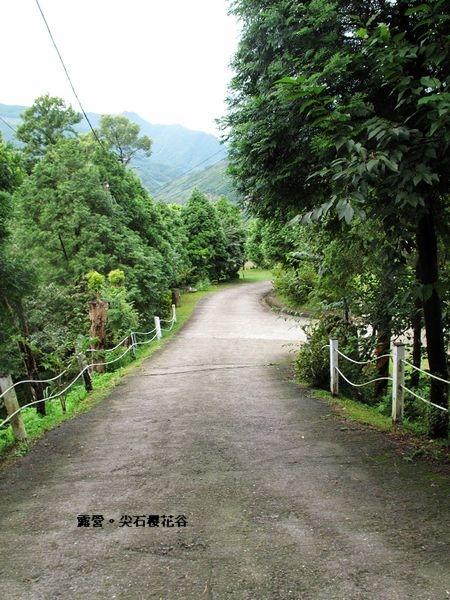 新竹尖石櫻花谷16.jpg