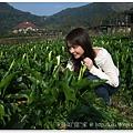 20110320陽明山 (4)