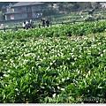 20110320陽明山 (7)