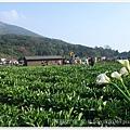 20110320陽明山 (13)
