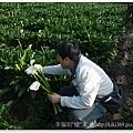 20110320陽明山 (14)
