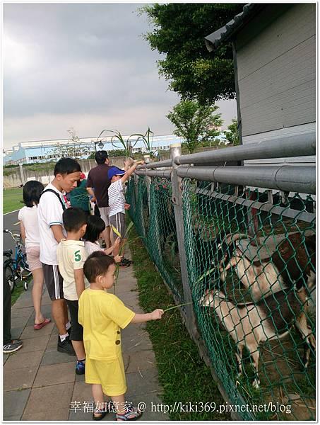 板橋 浮洲橋下看羊 (4).JPG