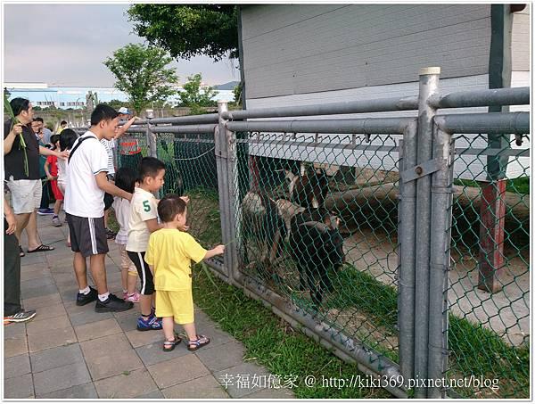 板橋 浮洲橋下看羊 (5).JPG