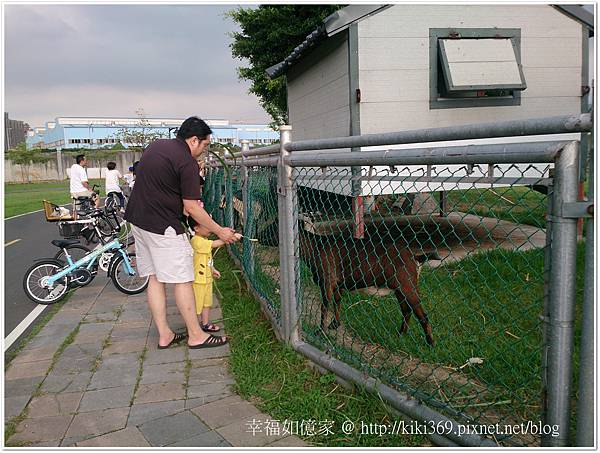板橋 浮洲橋下看羊 (12).JPG