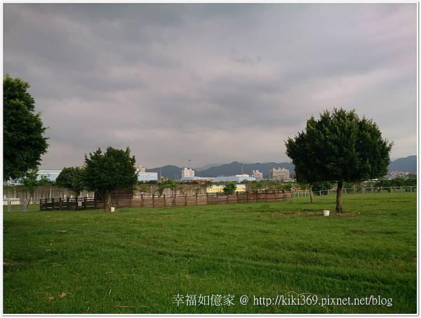 板橋 浮洲橋下看羊 (1).JPG