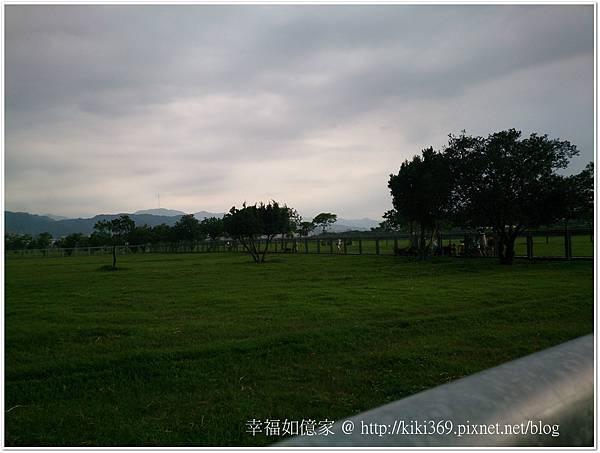 板橋 浮洲橋下看羊 (2).JPG