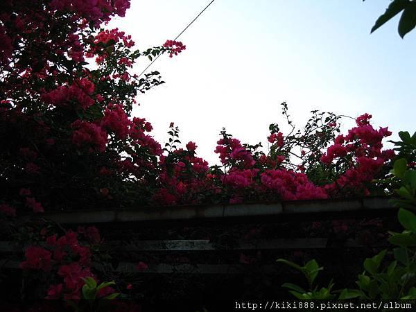 照片 137.jpg