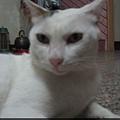 KIKI貓 127.jpg