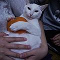 KIKI貓抱柿子