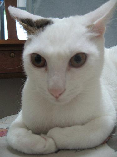 貓咪的大頭照