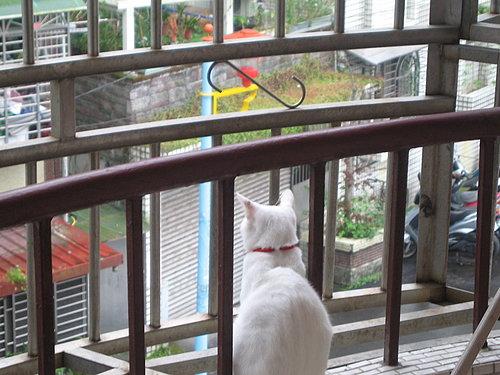 KIKI貓登高遠眺