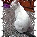 /home/service/tmp/2009-03-09/tpchome/1843077/114.jpg