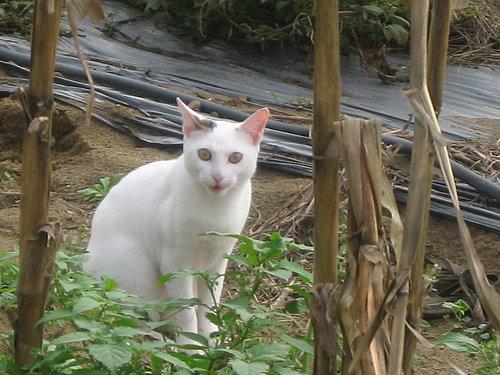 可愛的名模貓