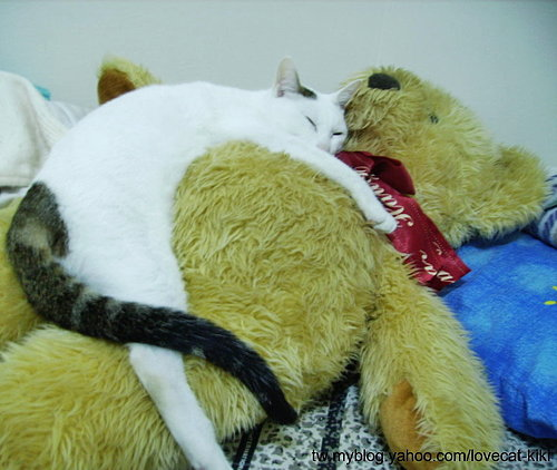 KIKI貓最愛的熊熊