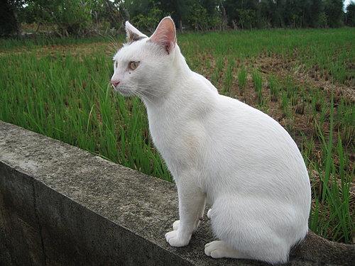 KIKI貓咪