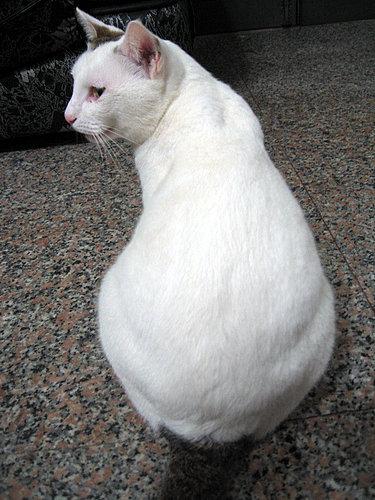 KIKI貓的大屁股