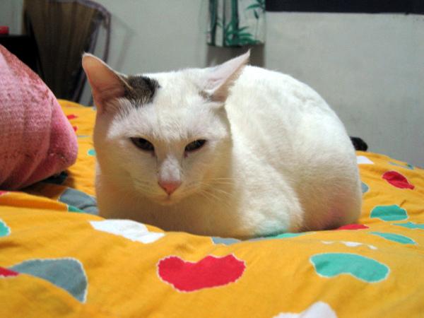 可愛貓咪照片
