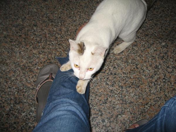 KIKI貓抓人