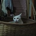貓咪睡籠子