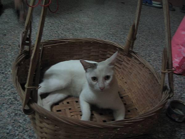 KIKI貓愛玩籠子
