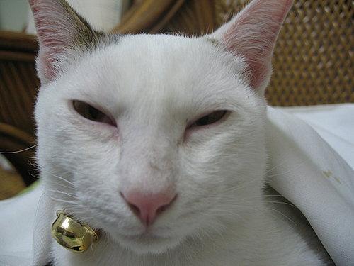 KIKI貓的大頭.jpg