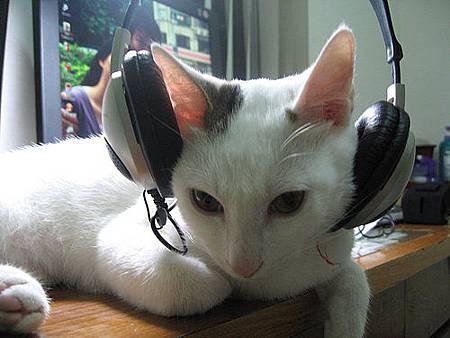 KIKI貓戴耳機.jpg