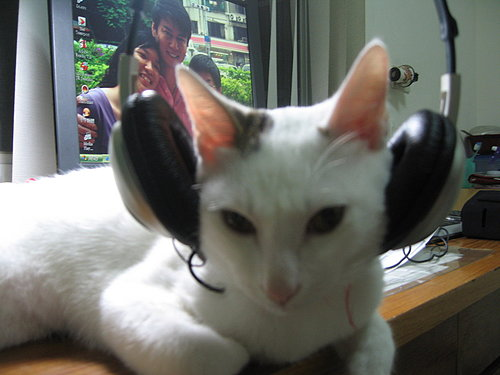 KIKI貓聽音樂.jpg