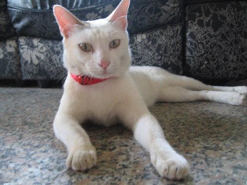 kiki貓照片.jpg