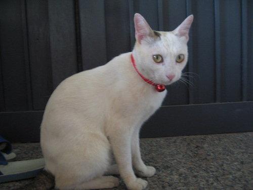 可愛的KIKI貓.jpg