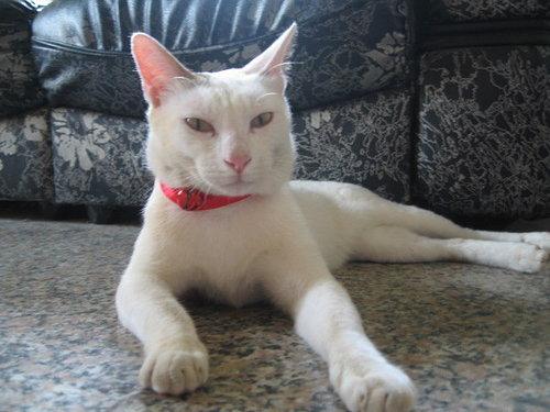 名模貓kiki.jpg