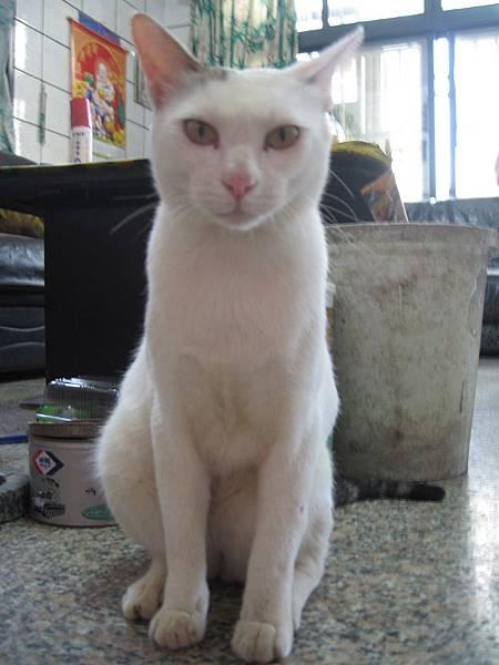 KIKI貓 075.jpg
