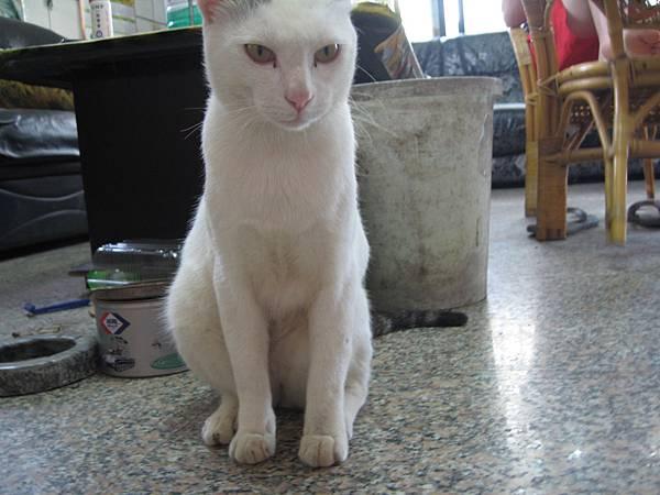 KIKI貓 076.jpg