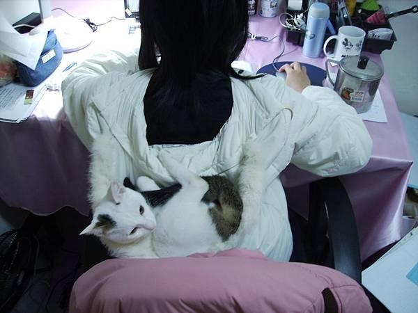 惡劣的KIKI貓