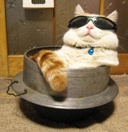 耍酷的貓咪
