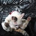 KIKI貓 082.jpg