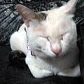KIKI貓 104.jpg