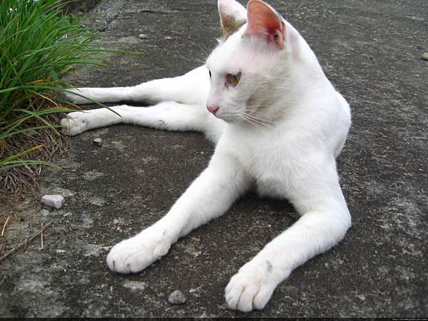 KIKI貓 101.jpg