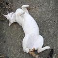 KIKI貓 118.jpg