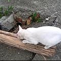 KIKI貓 123.jpg