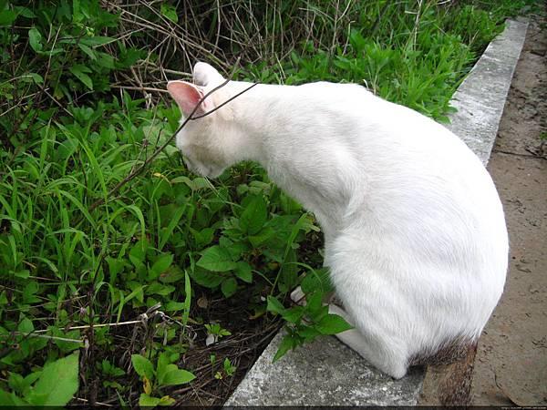KIKI貓 125.jpg