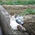 KIKI貓 131.jpg