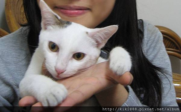 可愛KIKI貓