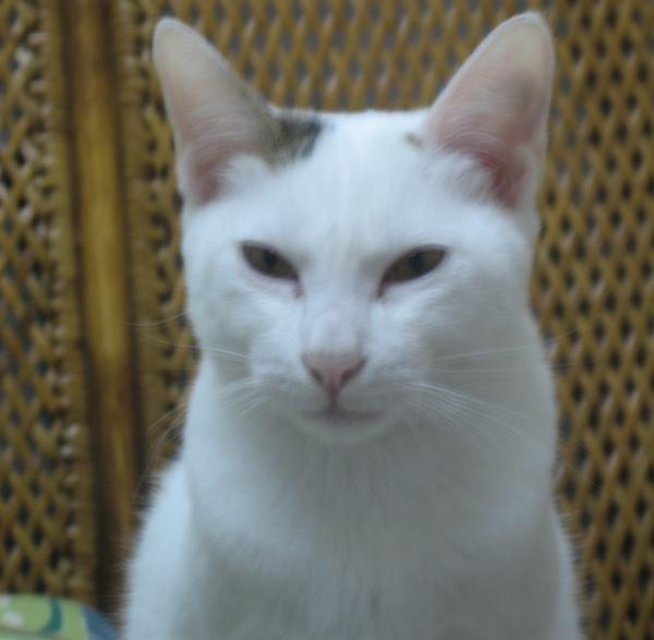 KIKI貓生氣了